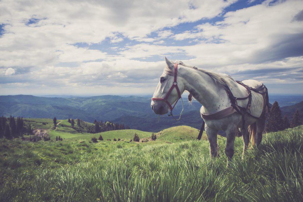 Landschaft in Siebenbürgen, Rumänien
